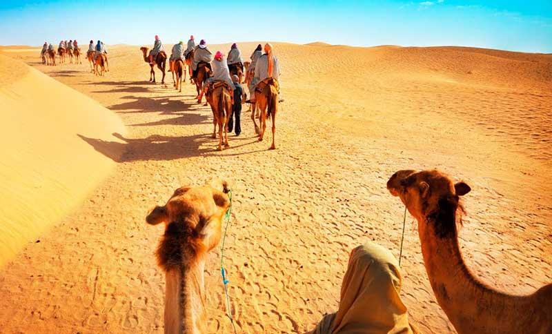 safari on camels